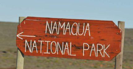 Namaqua Safari