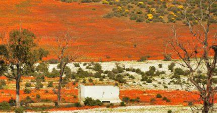 Skilpad nature reserve