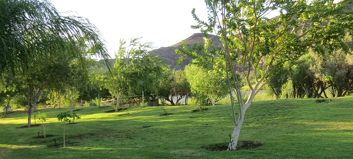 Green Grassy Campsites in Vioolsdrift