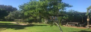 Quinine Tree